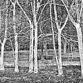 White Grove by Debra and Dave Vanderlaan