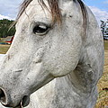 White Horse Closeup by Terry Fleckney