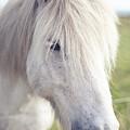 White Horse by copyright by Elena Litsova Photography