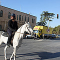 White Horse In Bethlehem Street by Munir Alawi
