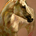 White Horse by Ylli Haruni