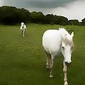 White Horses by Jim Painter