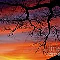White Oak Sunrise by Thomas R Fletcher