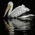 White Pelican De by Ernie Echols