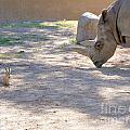 White Rhino And Ibex by Mary Deal