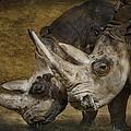 White Rhinos by Saija  Lehtonen