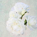 White Roses by Diana Haronis