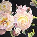 White Roses by Donna Walsh
