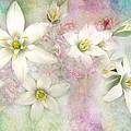 White Stars I by Debbie Portwood