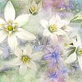 White Stars II by Debbie Portwood