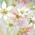 White Stars IIi by Debbie Portwood