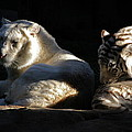White Tiger And Lion by Kate Purdy