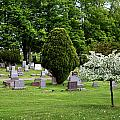 White Tree In Cemetery by Lorraine Devon Wilke