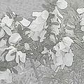 White Wild Flowers by Katrina Johns