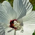 White Wildflower I by Debbie Portwood