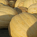 White Yellow Pumpkins by LeeAnn McLaneGoetz McLaneGoetzStudioLLCcom
