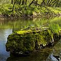 Whitewater River Spring 12 by John Brueske