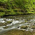 Whitewater River Spring 8 A by John Brueske