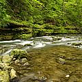 Whitewater River Spring 8 C by John Brueske