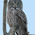Whoo Are You by Gerry Sibell