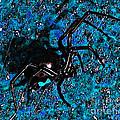 Wicked Widow - Blue by Al Powell Photography USA