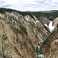 Wide View Of The Lower Falls In Yellowstone by Living Color Photography Lorraine Lynch