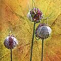 Wild Allium Ala Grunge by Kathy Clark