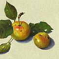Wild Apples In Color Pencil by Joyce Geleynse