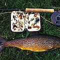 Wild Brown Trout And Fishing Rod by Axiom Photographic