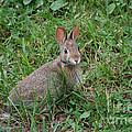 Wild Bunny by Susan Stevens Crosby
