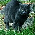 Wild Cat Hunter by Colette V Hera  Guggenheim