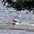 Wild Dolphin Feeding by Paul Ward