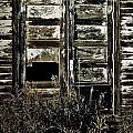 Wild Doors by Empty Wall