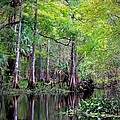 Wild Florida - Hillsborough River by Carol Groenen