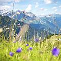 Wild Flower And Grass by Torsten Muehlbacher