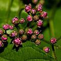 Wild Flower Blossoms 2 by Robert Morin