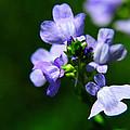 Wild Flower by John Blanchard