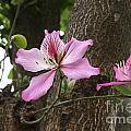 Wild Flower by Maxine Bochnia