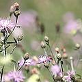Wild Flowers - Just Wild by Travis Truelove