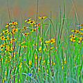 Wild Flowers by Bill Cannon