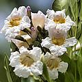 Wild Flowers by Douglas Barnard
