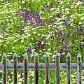 Wild Flowers On A Meadow by Jorg Greuel