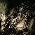 Wild Grasses by Bonnie Bruno
