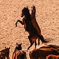 Wild Hooves by Alistair Lyne