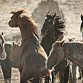 Wild Horse Battle by Wes and Dotty Weber