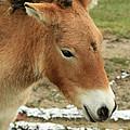 Wild Horse by Crystal Heitzman Renskers