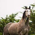 Wild Horse In The Wilderness by U Schade