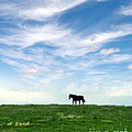 Wild Horse On Grassy Hill by Jill Battaglia