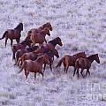 Wild Horses  by Jeff Swan