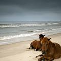 Wild Horses by photo by Edward Kreis, dK.i imaging